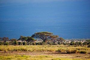 Savanna landscape, Amboseli, Africa