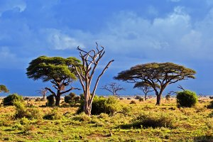 Savanna landscape, Kenya, Africa