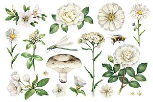 White summer nature illustrations