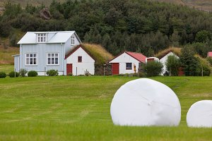 White Hay Rolls on a Green Field of