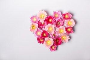 Heart of mallow flowers. Minimalism