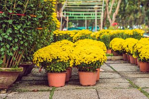 Yellow flowers in honor of the