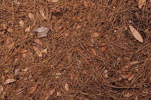 Pine Forest Floor Background