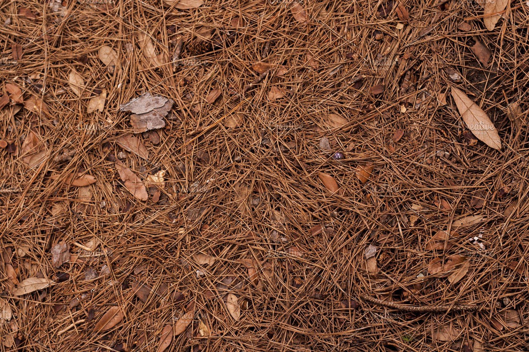 Pine Forest Floor Background | High