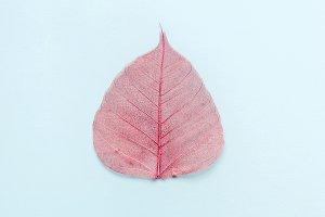 Pink openwork autumn leaf on a blue