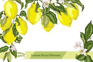 Citrus Blossom with Fruits