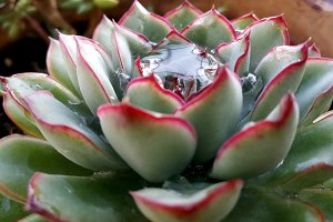 Succulent with a great water drop