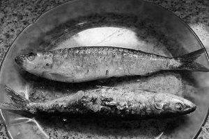 Sardines Background n Black White