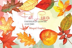 Fall Leaves:Autumn Leaf Illustration
