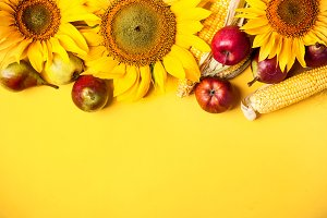 Beautiful sunflowers, pears and corn