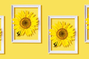 Sunflower in white frame Pattern on