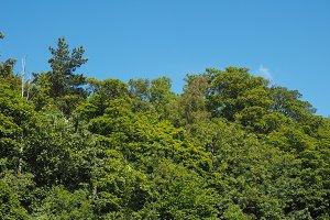 tree top background