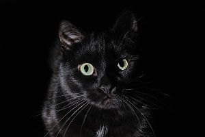 Beautiful young black cat on a black