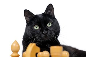Portrait of a black cat with chess