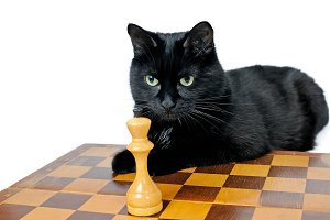 Black cat lying on a chessboard