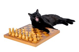 Black cat lies and yawns on a chess