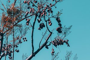 plant on a blue background sky. fash
