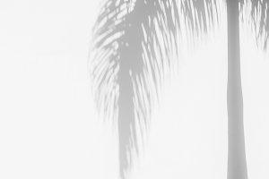 Palm shadow tropical mood on white b