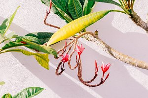 Tropical plant on white background w