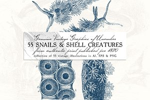 55 Snails and Shell Creatures Illus.