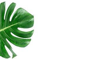 green tropical leaf on white backgro