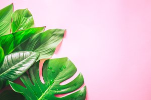 tropical leaves on a colored backgro