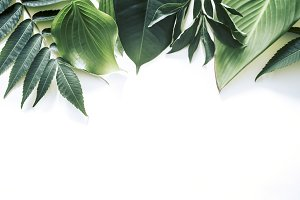 Tropical leaves on a white backgroun