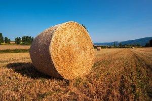 hay bail harvesting in golden field