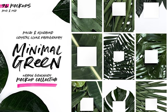 Palm Leaves | Urban Jungle Mockup