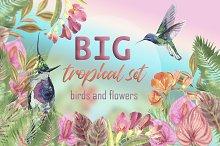 Large watercolor tropical set
