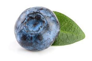 Single fresh blueberry with leaf