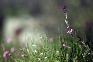 field wild flowers.