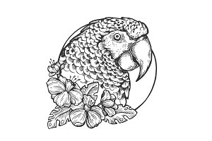 Parrot bird head animal engraving