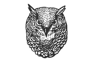 Owl bird head animal engraving