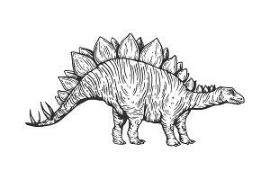 Stegosaurus dinosaur engraving
