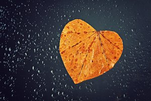 Yellow autumn leaf in the shape of a