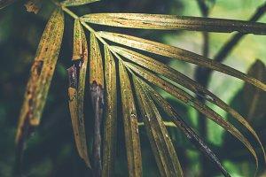 Tropical palm leaf texture, nature