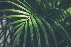 Tropical palm leaf texture, nature