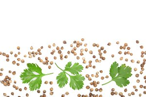 coriander seed and leaves isolated