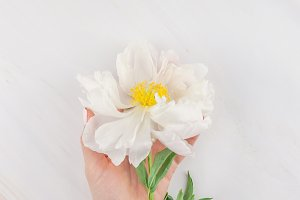 White peony flowers on marble backgr