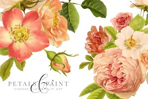Petals & Paint - Floral Clip Art
