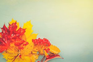 Fall leaves on blue