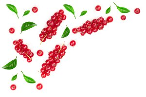 Red currant berries with leaf