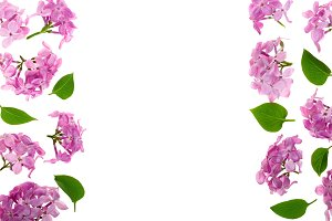 frame with lilac flowers and leaves