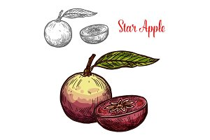 Star apple or cainito fruit sketch