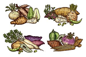 Farm vegetables and beans sketches