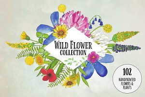 Watercolor Wildflower Collection