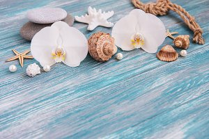Shells, starfish and orchids