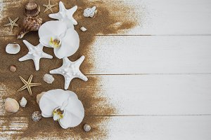 sea shells with sand and orchid flow