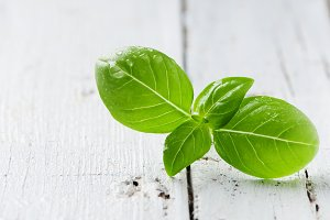 Green fresh basil